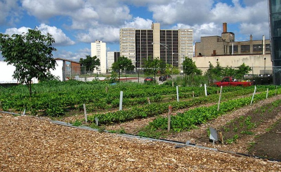 Gardening in polluted cities and the efects