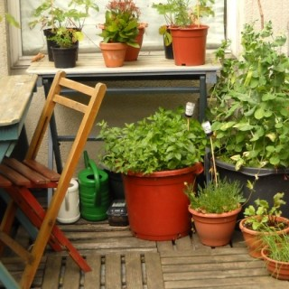 Practical tips for urban gardening on the balcony