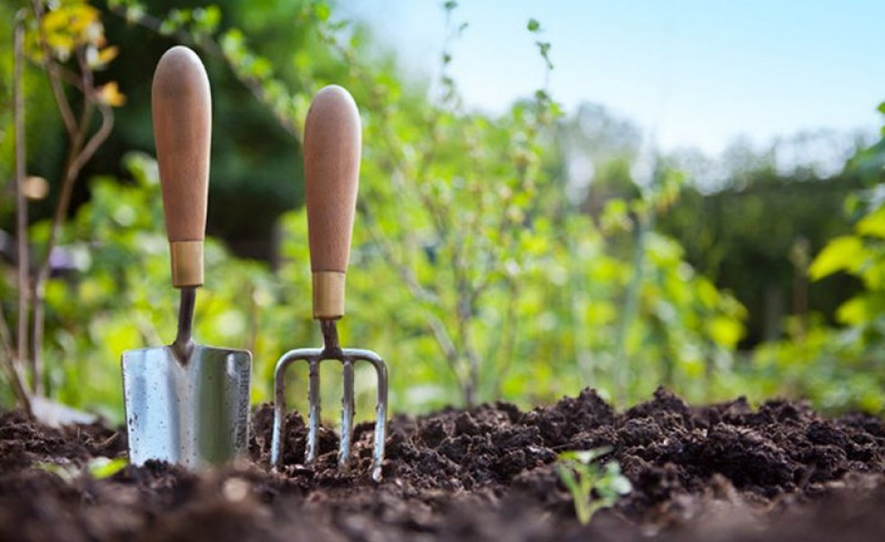 Gardening tips for beginners in May