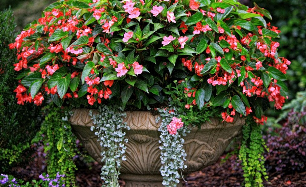 Best flower combinations for containers in the city