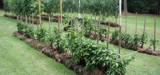 Straw bale gardening in the city