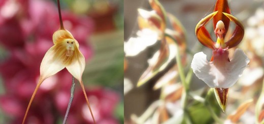 Flowers that look like something else in nature