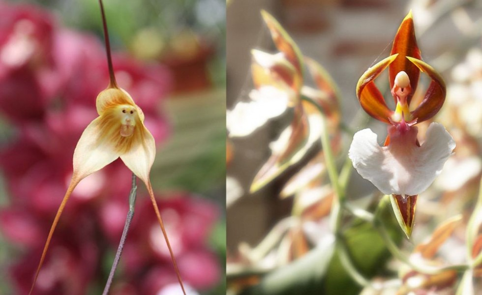 Flowers that look like something else in nature