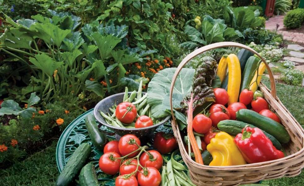Organic gardening at home