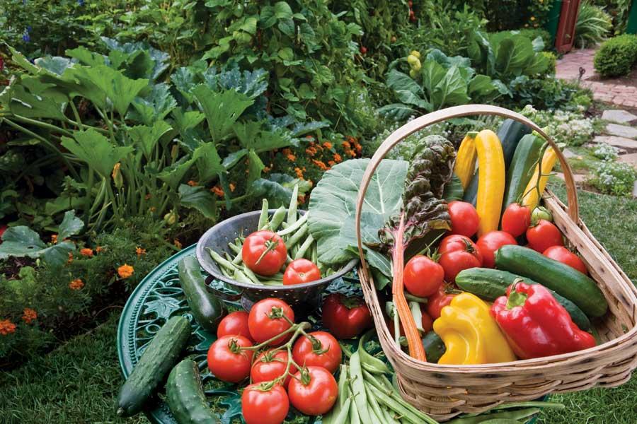 Organic gardening - practical tips