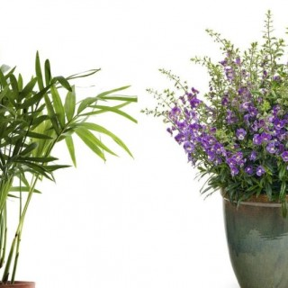 Heat tolerant plants in summer