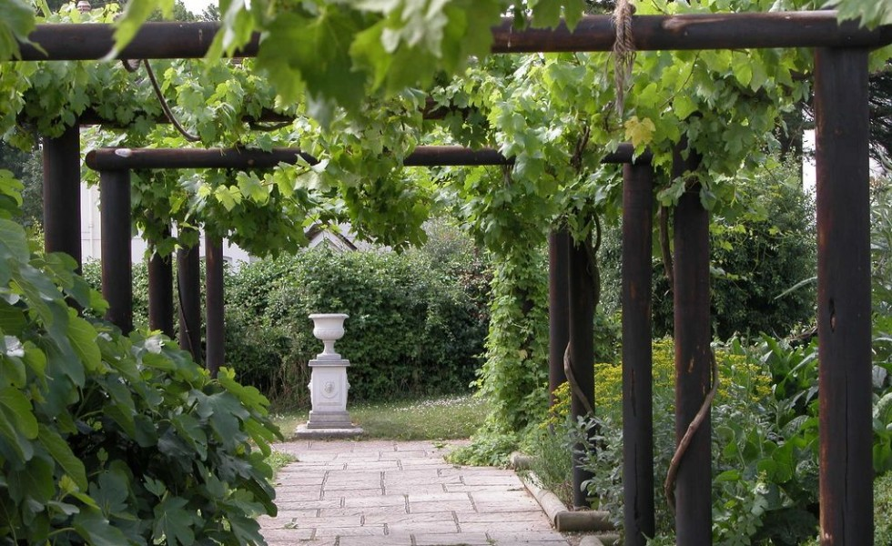Charmant How To Build A Grape Vine Support In The Garden