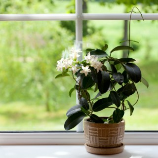 Plants that help you sleep easily