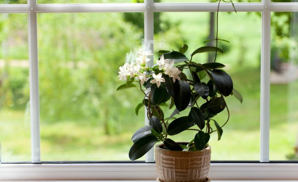 Plants that help you sleep easily