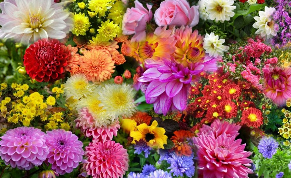 Flowers that bloom in autumn in the garden
