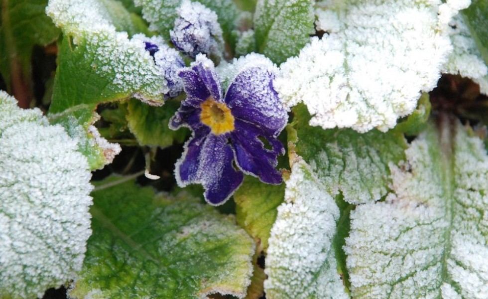Flowers to plant in the fall to resist frost