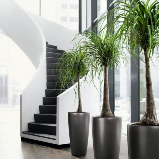 Seven tricks for healthier potted plants at home