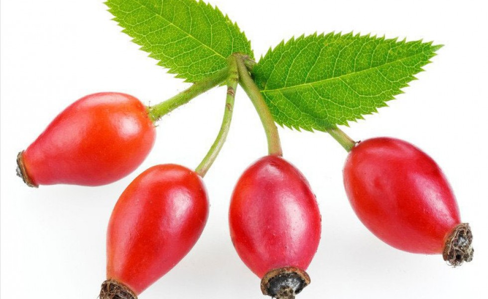 What to do with rosehips at home