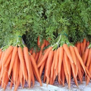 Growing vegetables indoors in easy ways