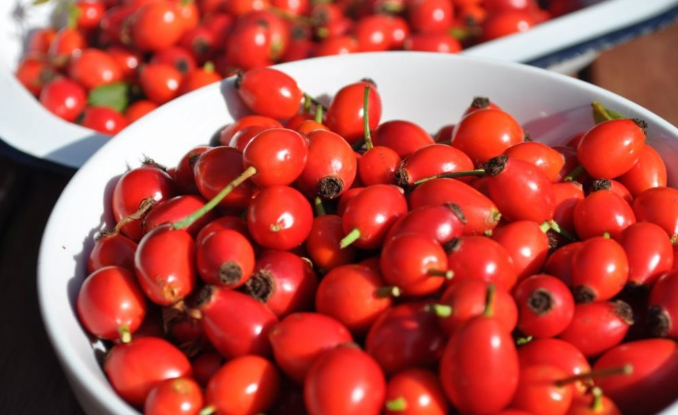 Rosehip syrup health benefits and recipes