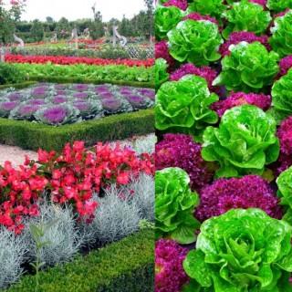 Decorative vegetable garden ideas for all