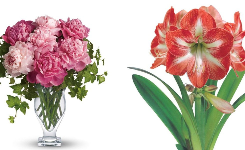 November wedding flowers ideas for all