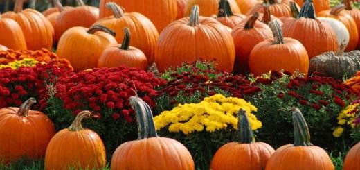 Gardening in October for next spring