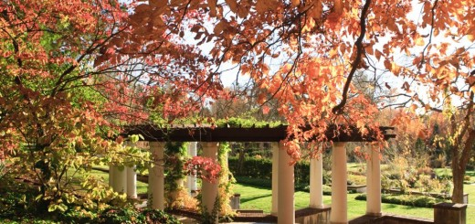 Fall landscaping ideas easy to follow