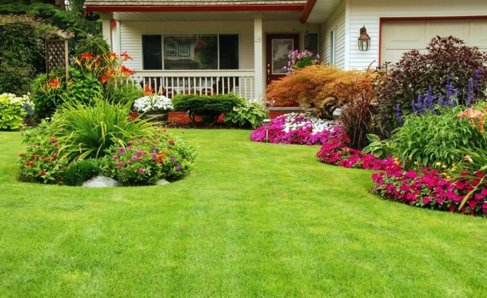 Autumn lawn care advice before winter