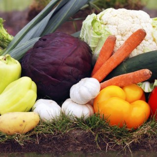Vegetables to plant in fall for winter