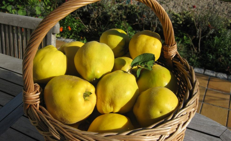 Quince recipes for babies at home