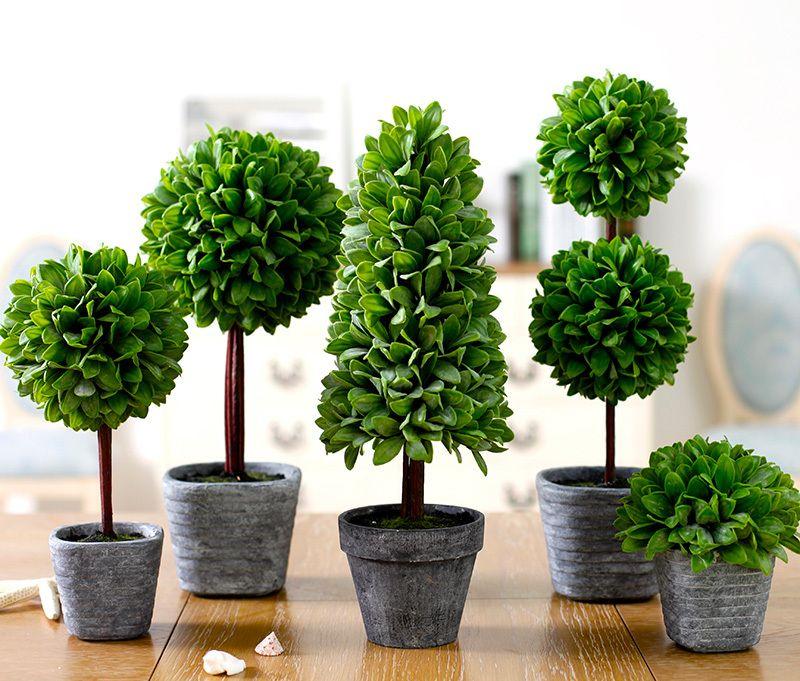 Plant Decorating Ideas