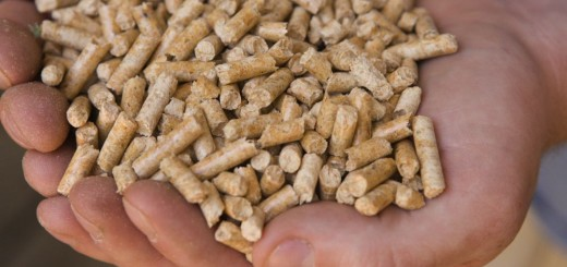 How to make wood pellets at home