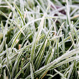 Winter lawn care advice for all