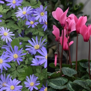 Winter perennial plants for home