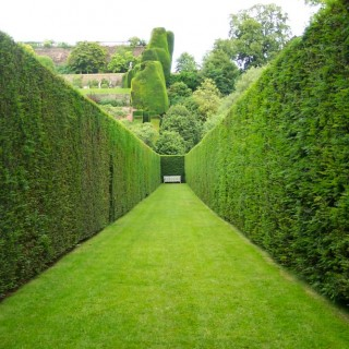 Fast growing hedging plants at home