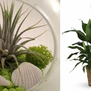 Indoor plants that absorb humidity and toxins