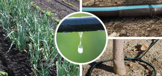 DIY drip irrigation systems at home