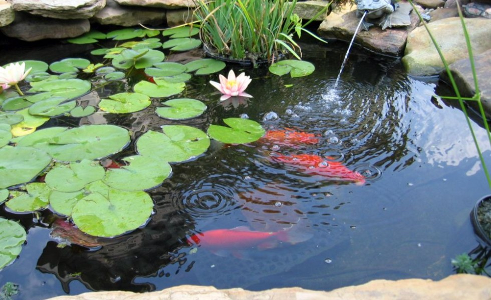 Garden pond design ideas for all