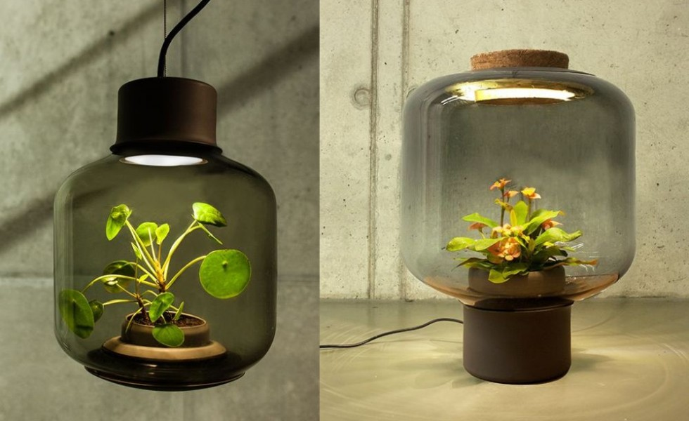 Plant growing lamps at home