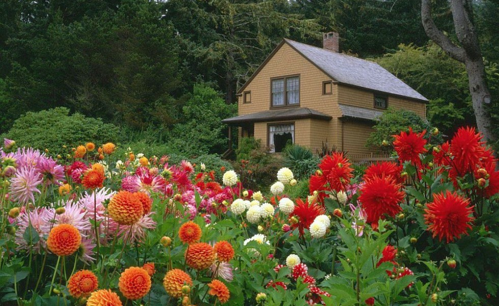 Flowers Themselves Are A Presence Full Of Color And Energy In A Garden,  Diversifying The Natural Landscape By Savory Chromatic Plays.