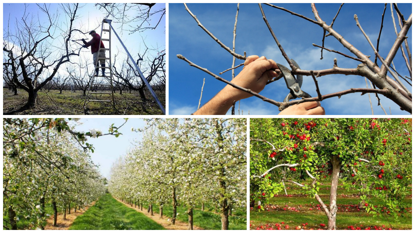 spring trimming in the orchard