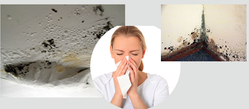 how to protect your walls from dampness and mold