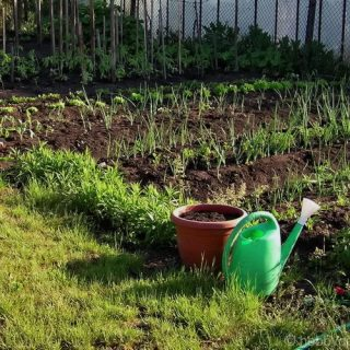 spacing when planting vegetables