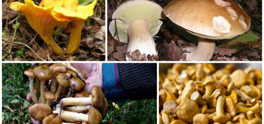 wild mushrooms business ideas