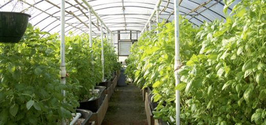 rules to be observed in a greenhouse
