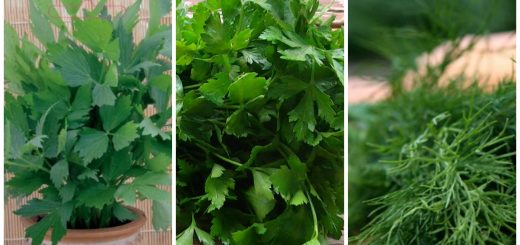 tips for planting herbs