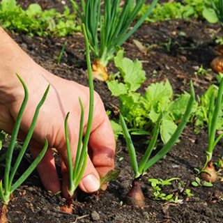 weeding out your garden