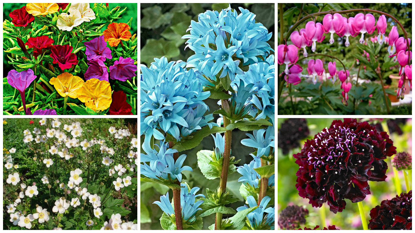 Perennials With The Most Beautiful Flowers A Practical Choice