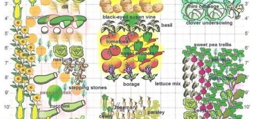 where to plant each vegetable in the garden