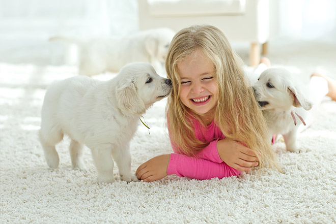 how often to clean carpets