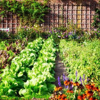 checklist for your vegetable garden in August