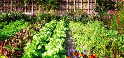 checklist for your vegetable garden in August