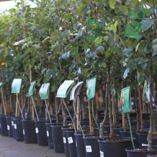 planting fruit trees in autumn